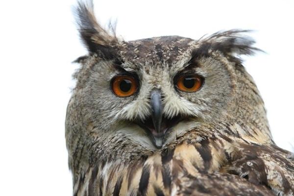 http://labell.ir/images/animal/animal-016.jpg