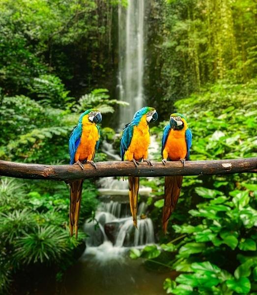 http://labell.ir/images/animal/animal-020.jpg