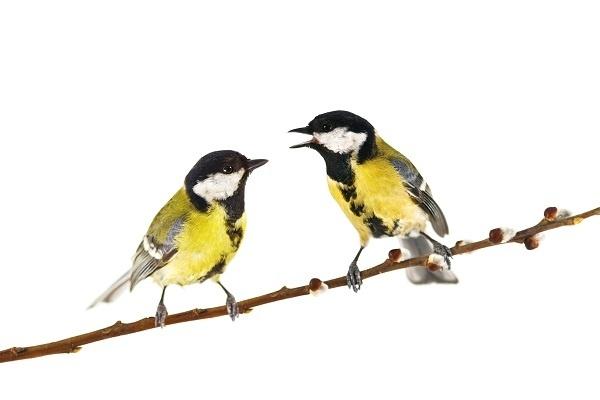 http://labell.ir/images/animal/animal-027.jpg