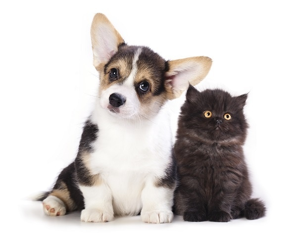 http://labell.ir/images/animal/animal-030.jpg