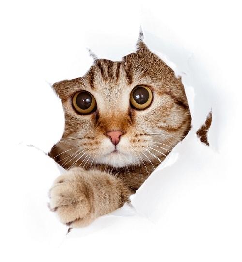 http://labell.ir/images/animal/animal-032.jpg