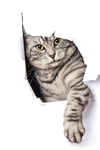 http://labell.ir/images/animal/animal-034.jpg
