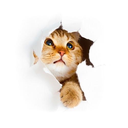 http://labell.ir/images/animal/animal-035.jpg