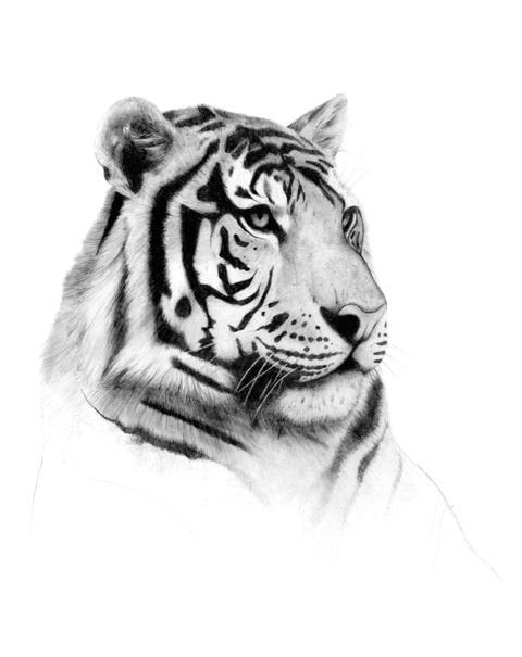 http://labell.ir/images/animal/animal-036.jpg