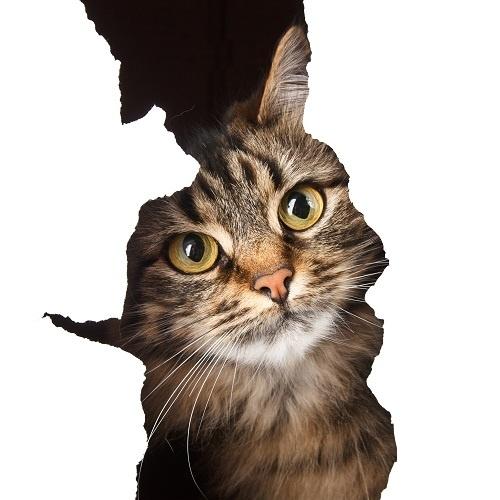 http://labell.ir/images/animal/animal-037.jpg