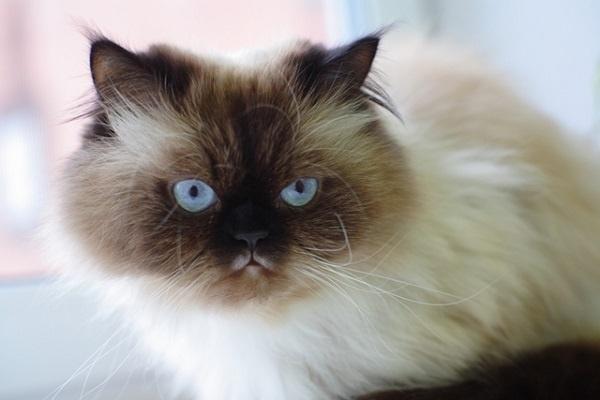 http://labell.ir/images/animal/animal-038.jpg