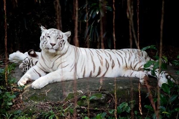 http://labell.ir/images/animal/animal-044.jpg