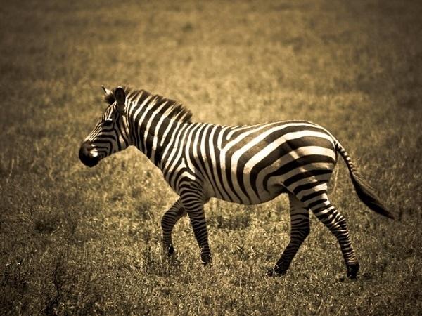 http://labell.ir/images/animal/animal-048.jpg