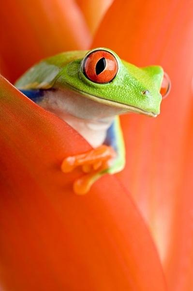 http://labell.ir/images/animal/animal-051.jpg