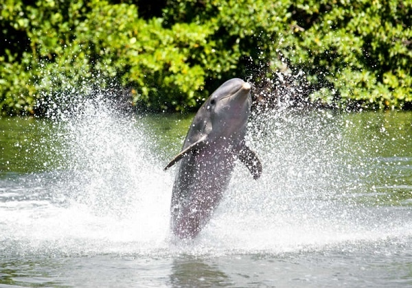 http://labell.ir/images/animal/animal-056.jpg