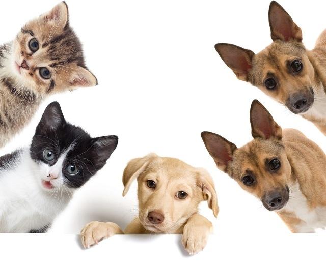 http://labell.ir/images/animal/animal-063.jpg