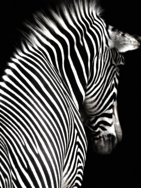 http://labell.ir/images/blackwhite/blackwhite-011.jpg