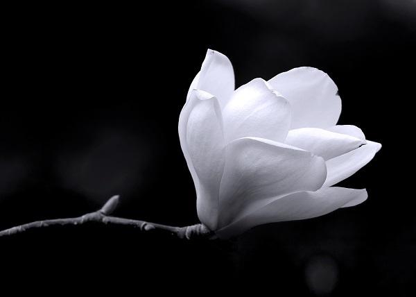 http://labell.ir/images/blackwhite/blackwhite-026.jpg