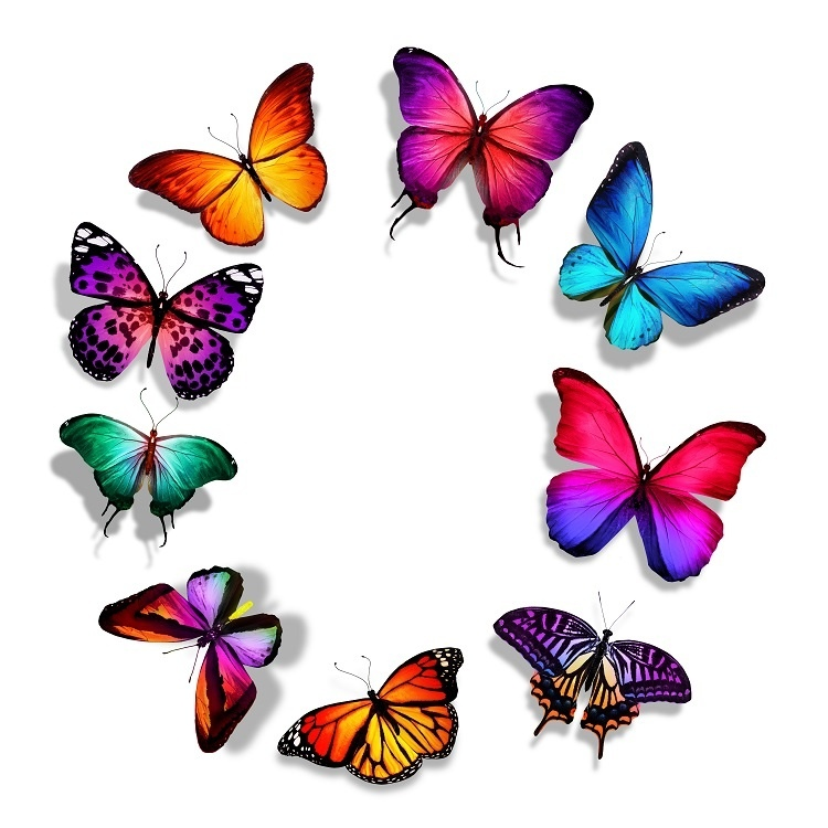http://labell.ir/images/butterfly/butterfly-001.jpg