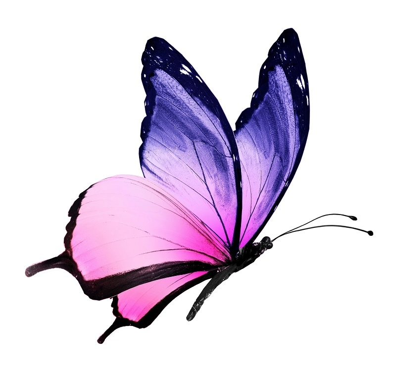 http://labell.ir/images/butterfly/butterfly-005.jpg