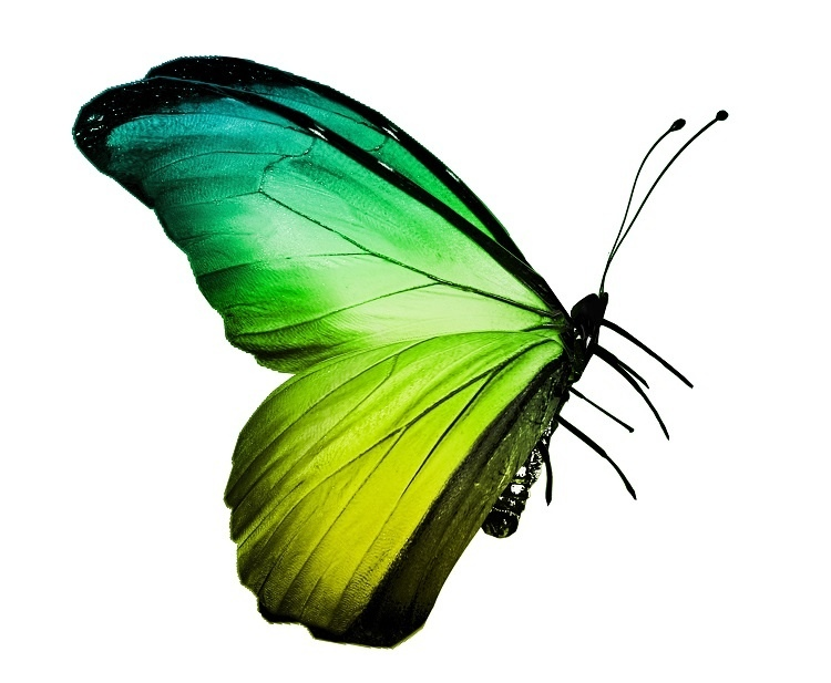 http://labell.ir/images/butterfly/butterfly-008.jpg
