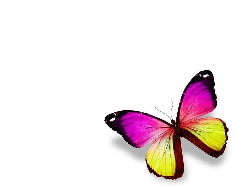 http://labell.ir/images/butterfly/butterfly-010.jpg