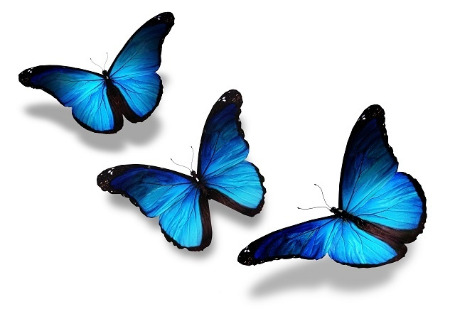 http://labell.ir/images/butterfly/butterfly-011.jpg
