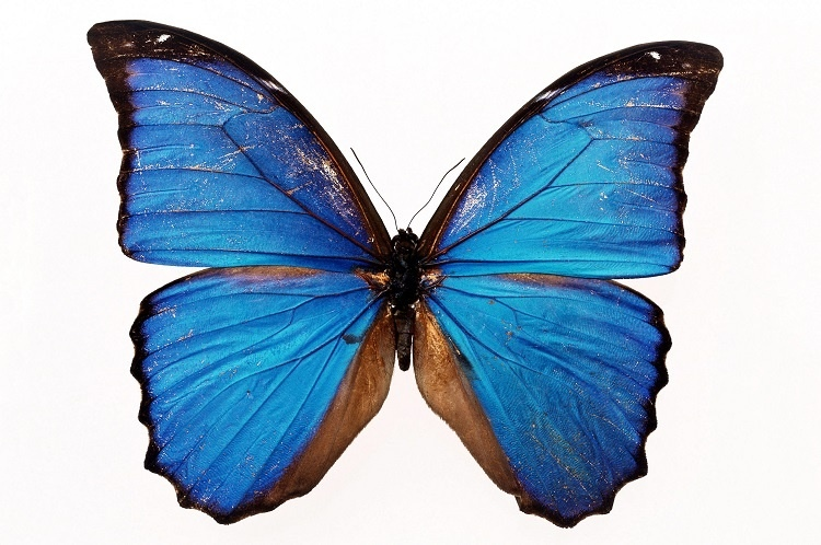 http://labell.ir/images/butterfly/butterfly-012.jpg