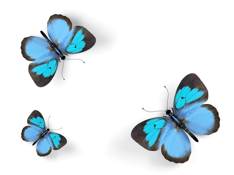 http://labell.ir/images/butterfly/butterfly-013.jpg