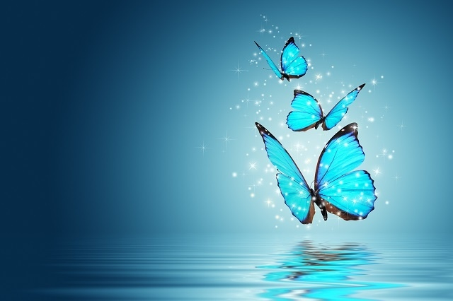 http://labell.ir/images/butterfly/butterfly-014.jpg