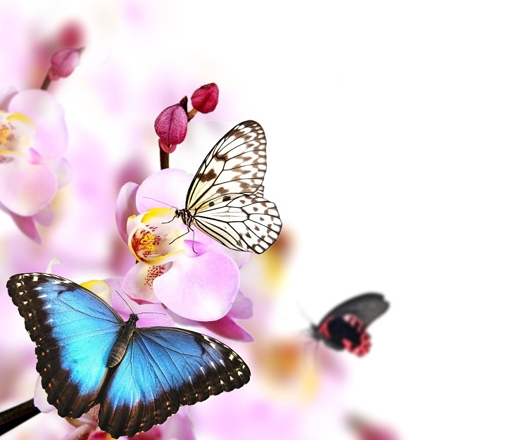 http://labell.ir/images/butterfly/butterfly-017.jpg