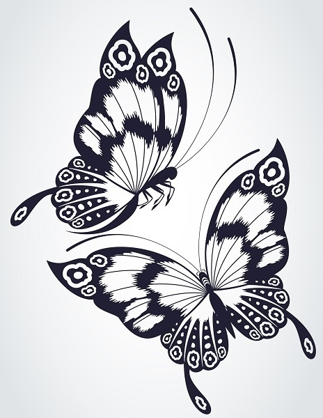 http://labell.ir/images/butterfly/butterfly-019.jpg