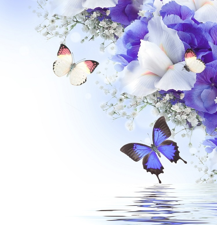 http://labell.ir/images/butterfly/butterfly-021.jpg