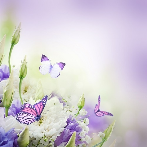http://labell.ir/images/butterfly/butterfly-023.jpg
