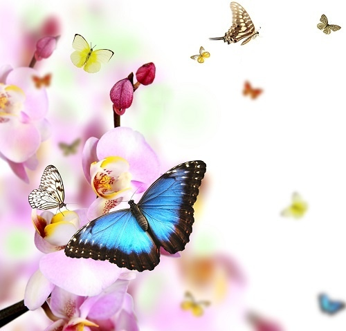 http://labell.ir/images/butterfly/butterfly-024.jpg
