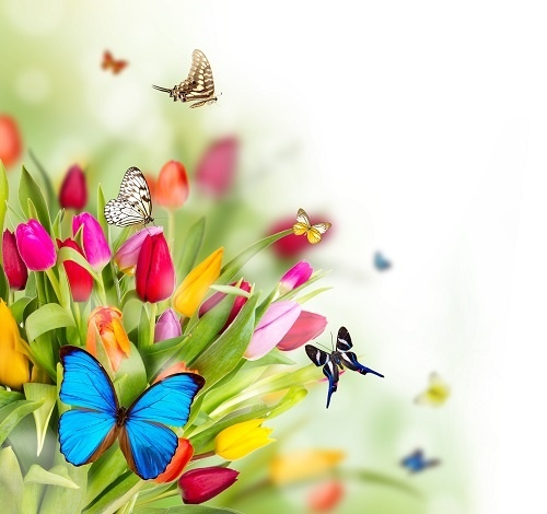 http://labell.ir/images/butterfly/butterfly-025.jpg