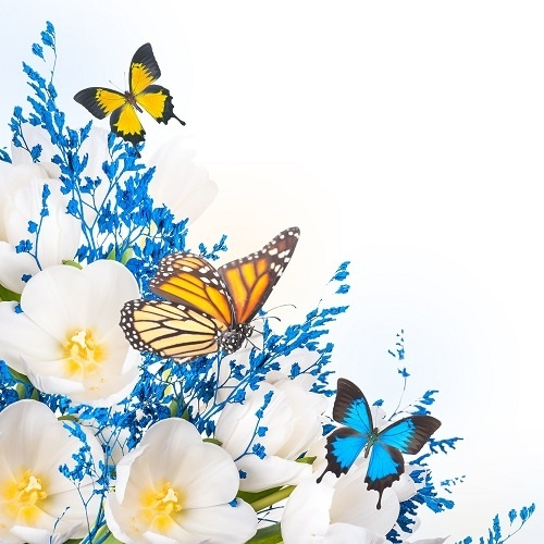 http://labell.ir/images/butterfly/butterfly-027.jpg