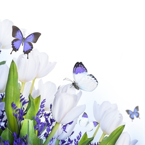 http://labell.ir/images/butterfly/butterfly-028.jpg