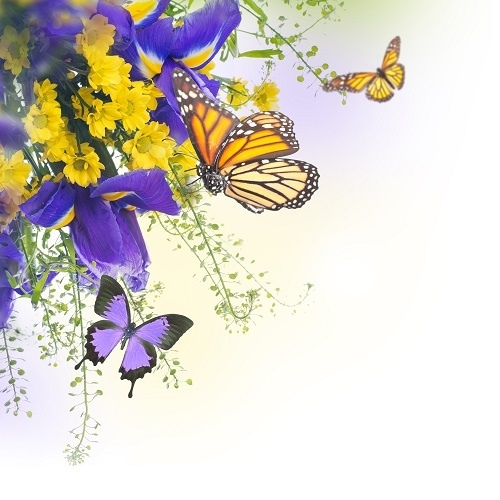 http://labell.ir/images/butterfly/butterfly-030.jpg