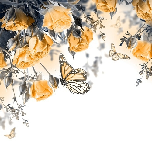 http://labell.ir/images/butterfly/butterfly-032.jpg