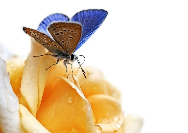 http://labell.ir/images/butterfly/butterfly-036.jpg