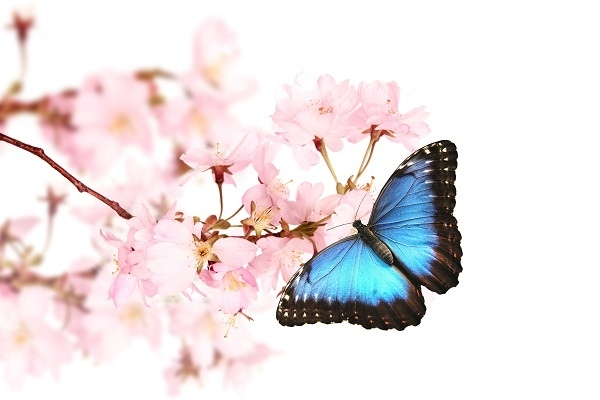 http://labell.ir/images/butterfly/butterfly-037.jpg