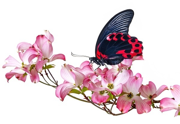 http://labell.ir/images/butterfly/butterfly-038.jpg