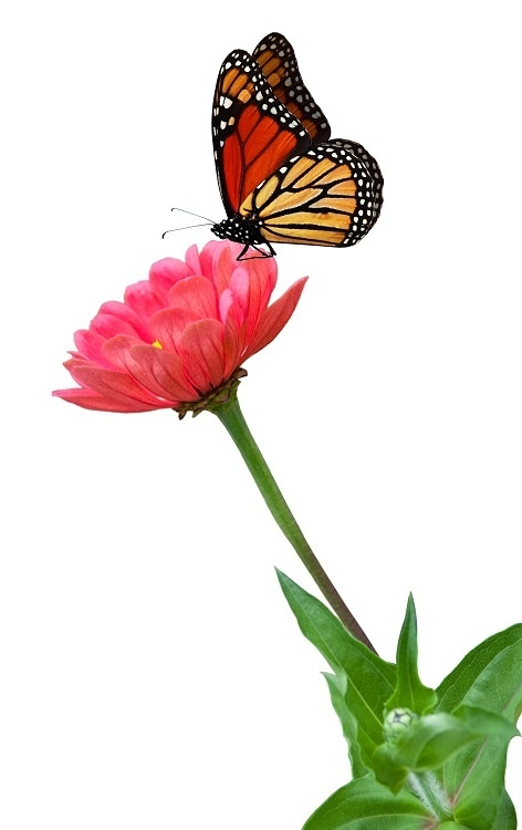 http://labell.ir/images/butterfly/butterfly-040.jpg