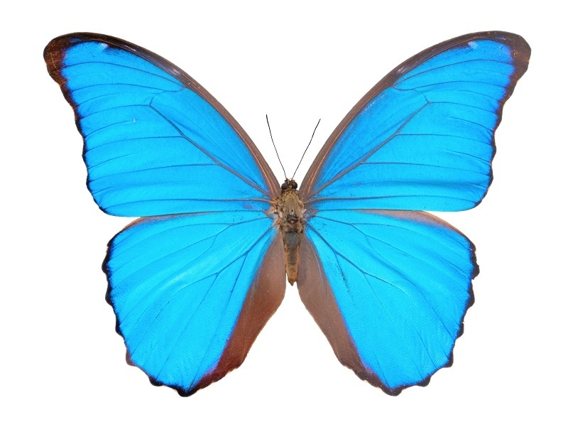 http://labell.ir/images/butterfly/butterfly-042.jpg