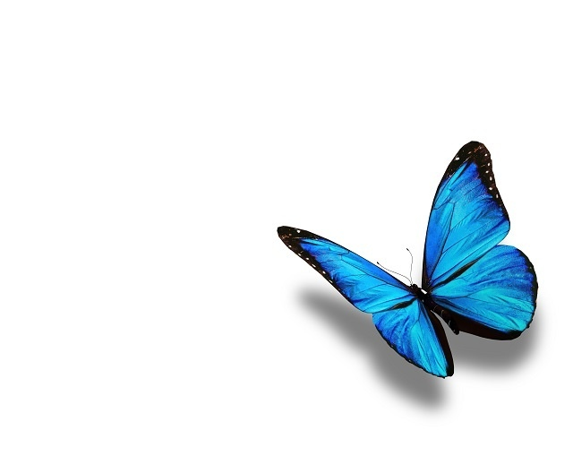 http://labell.ir/images/butterfly/butterfly-043.jpg