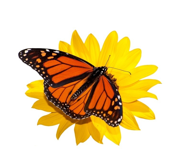 http://labell.ir/images/butterfly/butterfly-046.jpg