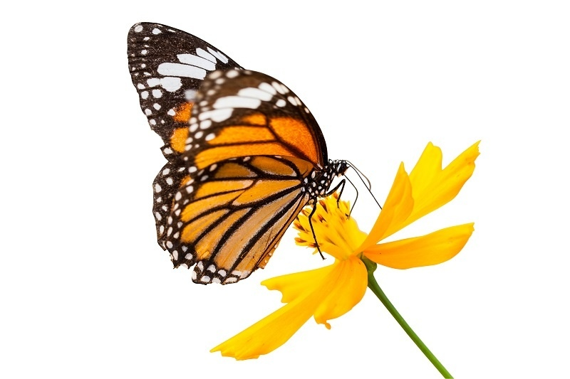 http://labell.ir/images/butterfly/butterfly-048.jpg