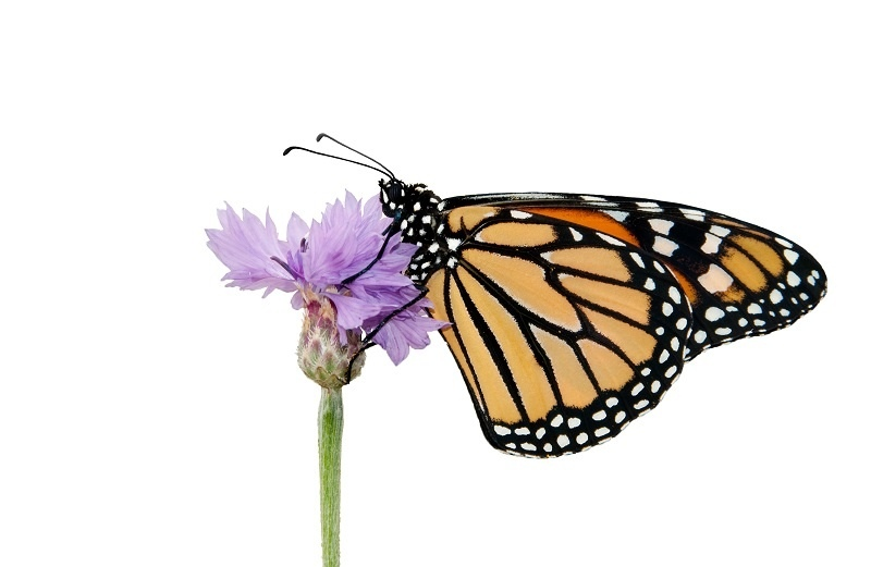 http://labell.ir/images/butterfly/butterfly-049.jpg