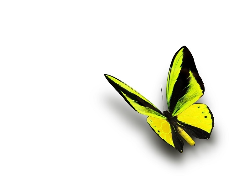 http://labell.ir/images/butterfly/butterfly-050.jpg
