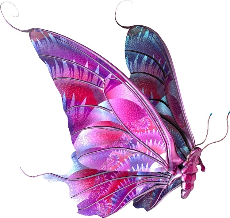 http://labell.ir/images/butterfly/butterfly-054.jpg