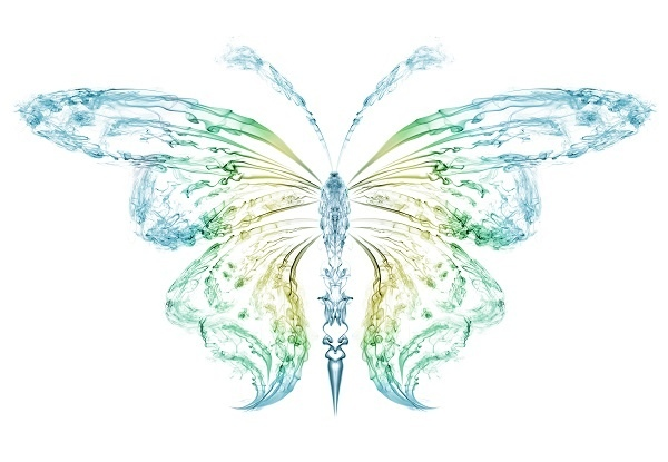 http://labell.ir/images/butterfly/butterfly-055.jpg