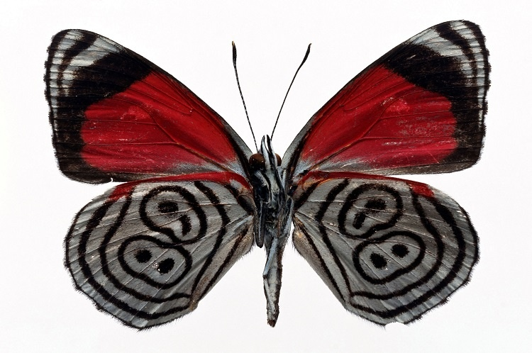 http://labell.ir/images/butterfly/butterfly-058.jpg