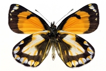 http://labell.ir/images/butterfly/butterfly-059.jpg