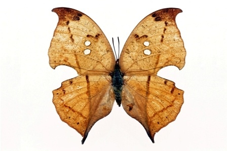 http://labell.ir/images/butterfly/butterfly-062.jpg